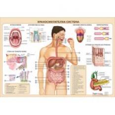 Учебно табло: Храносмилателна система