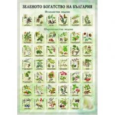 Стенно табло по биология - Зеленото богатство на България